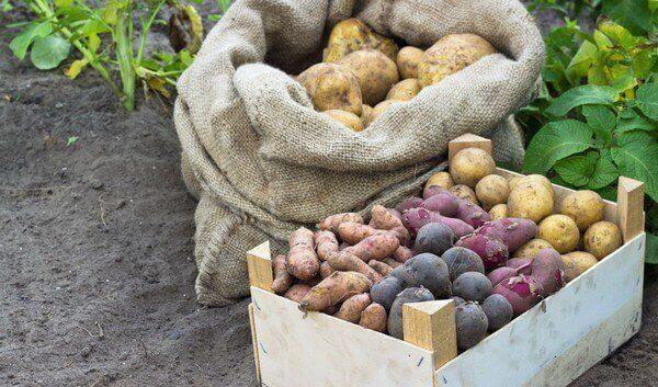 деревянный ящик для картофеля