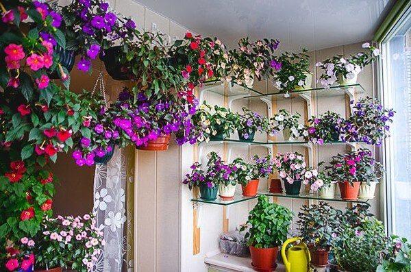 цветы на застекленном балконе