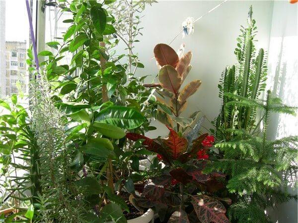 Ухоженный зимний сад на маленьком балконе