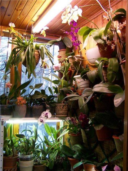 Орхидеи на балконе