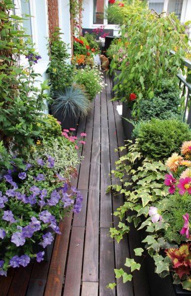 как сделать сад на балконе