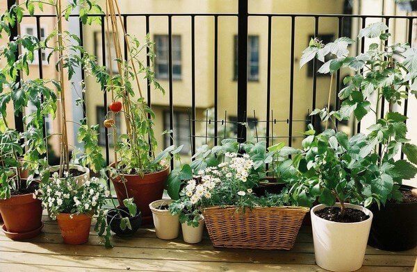 мини-огород