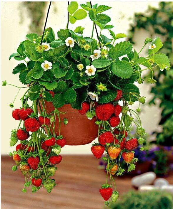 Как устроить огород на балконе: инструкция для начинающих