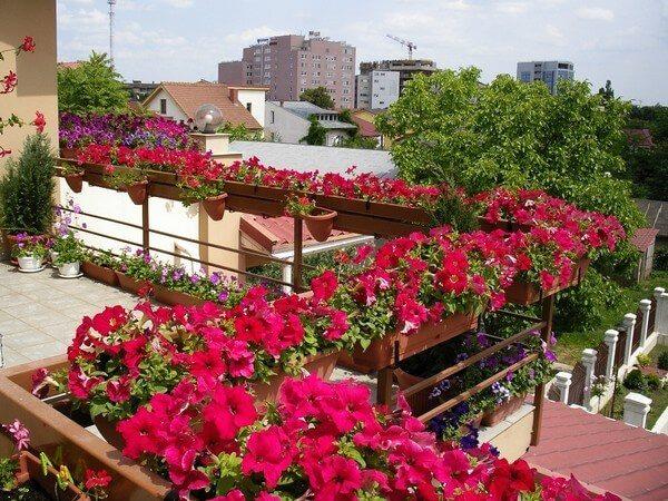 Украшение парапета балкона живыми цветами