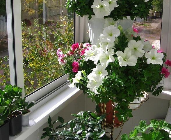 Какие цветы можно выращивать на солнечном и затененном балконе