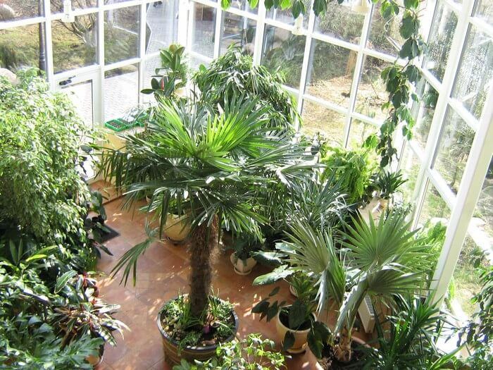 тропические растения в домашнем саду